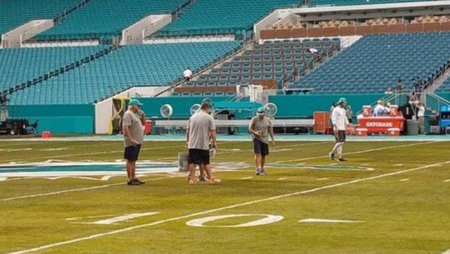 Miami Dolphins developing 80-acre sod farm to support their home field